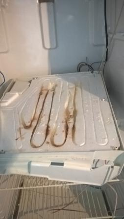 Не оттаивает задняя стенка холодильника