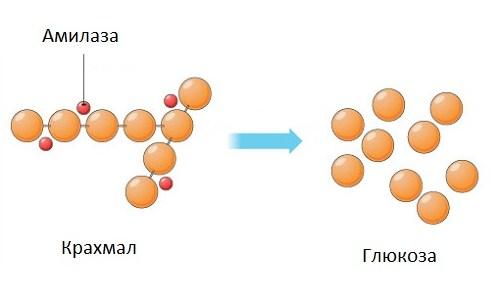 Амилаза в составе таблеток для посудомоечных машин расщепляет белковые соединения при отмывании
