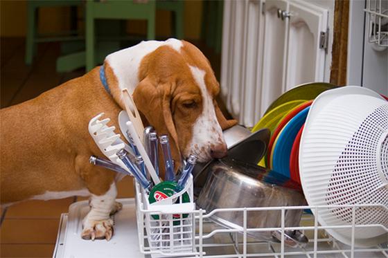 Для мытья и чистки посуды и игрушек домашних питомцев можно использовать посудомоечную машину